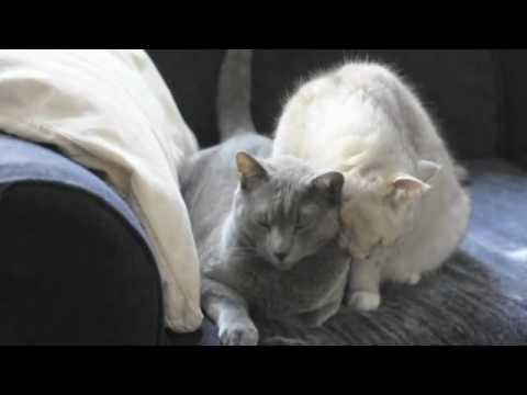 pussy Cat licks
