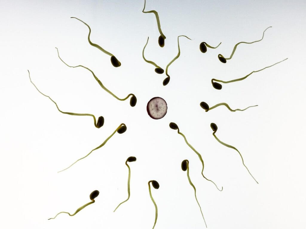 Sperma menge erhöhen